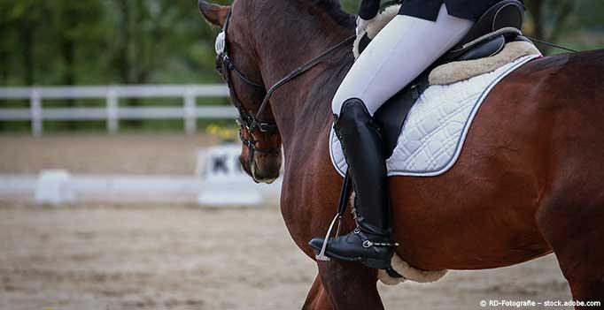 Reiter reitet Turnierpferd