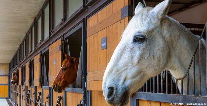 Pferde schauen aus Stall